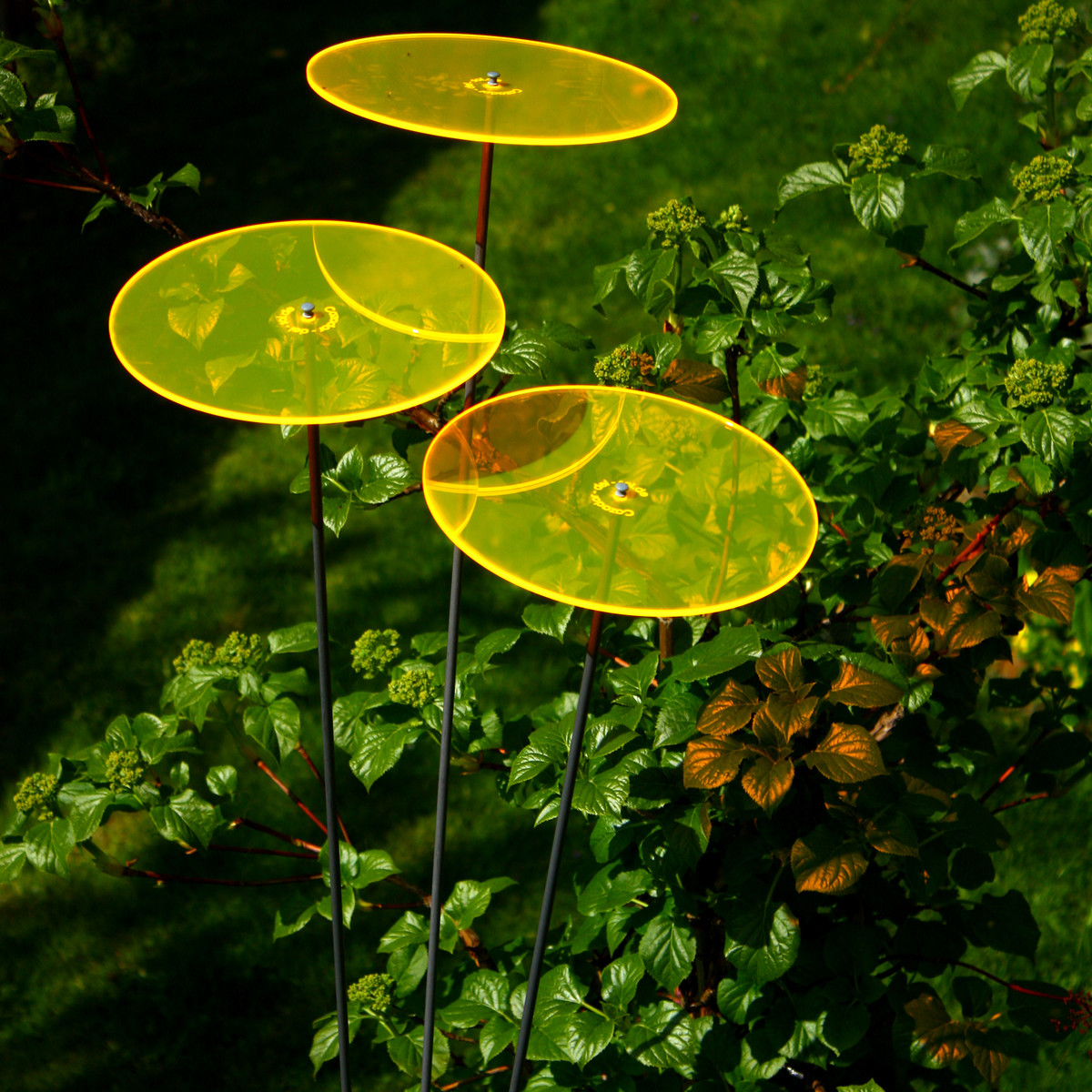 Cazador Del Sol Uno Sonnenfänger Gelb