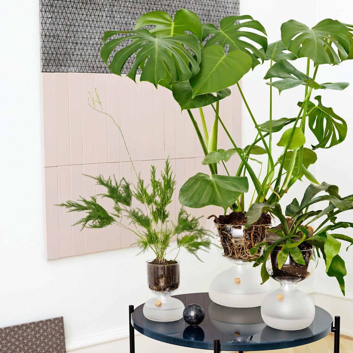 gaia gew chshaus von holmegaard im shop. Black Bedroom Furniture Sets. Home Design Ideas