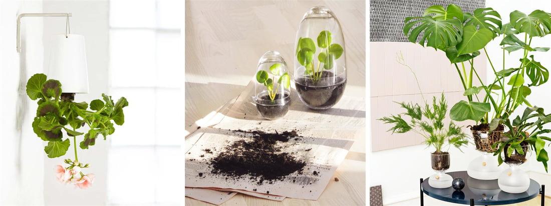 Flashsale - Indoor Gardening