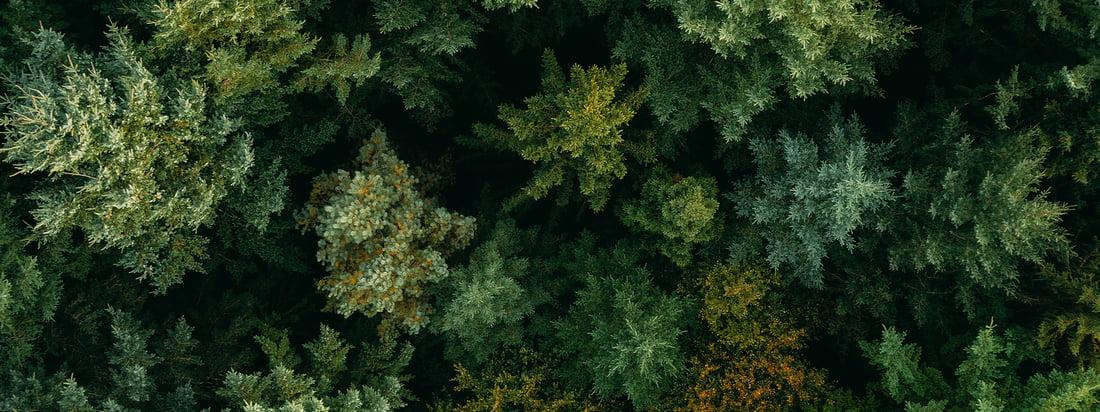 Tom Hegen Wald