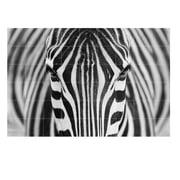 IXXI - Zebra