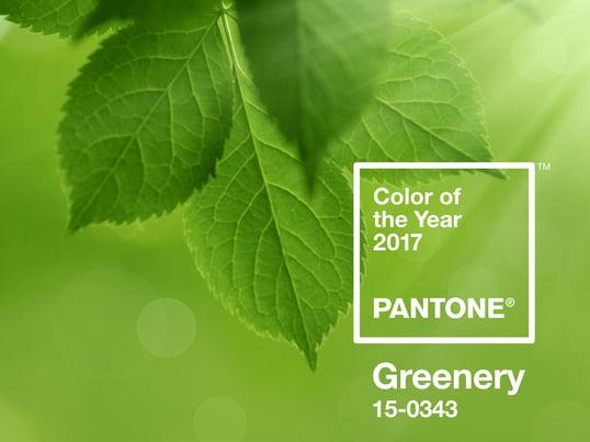 Greenery ist ein leuchtendes und frisches Grün. Das intensive Hellgrün wurde als Trendfarbe 2017 auserwählt und steht für Hoffnung, Ruhe und Erfrischung.