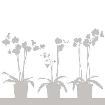 Orkide Sichtschutzfolie