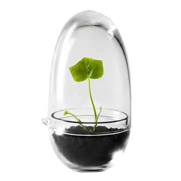 Katalogfreisteller: Grow Mini Gewächshaus