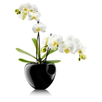 Eva Solo - Orchideentopf, schwarz