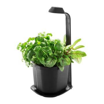 Tregren - Genie Kitchen Garden - schwarz