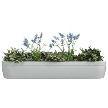 Der windowgreen Fensterbank Blumenkasten von rephorm in weiß