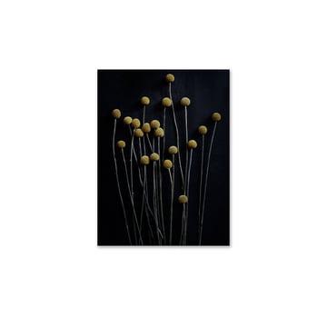 Paper Collective - Stillleben 01 (yellow drumstick), 30 x 40 cm