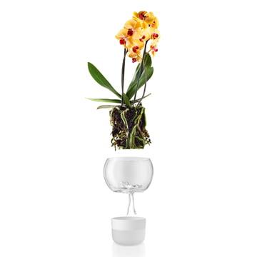 Selbstbewässernder Orchideentopf von Eva Solo