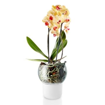 Selbstbewässernder Orchideentopf Ø 15 cm von Eva Solo