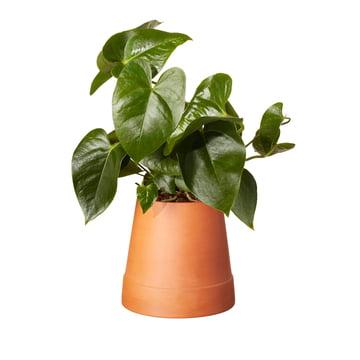 Boskke Flipped Planter in Terrakotta