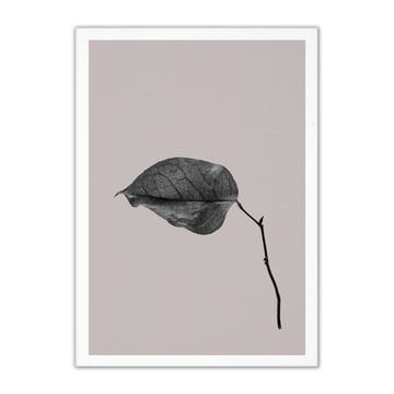 Paper Collective - Sabi Leaf 03, 50 x 70 cm