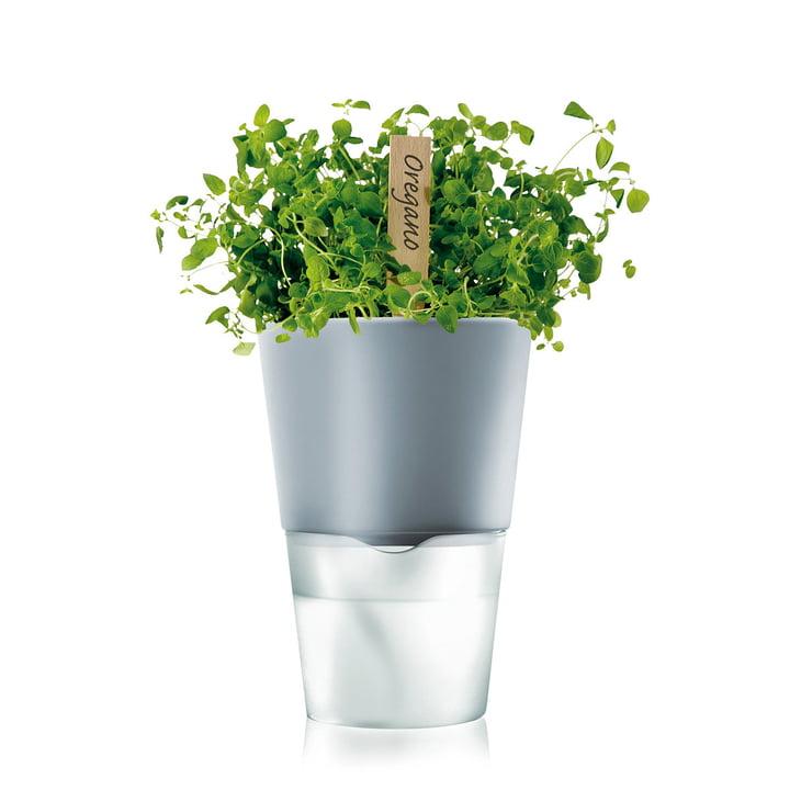 selbstbewässernder Blumentopf