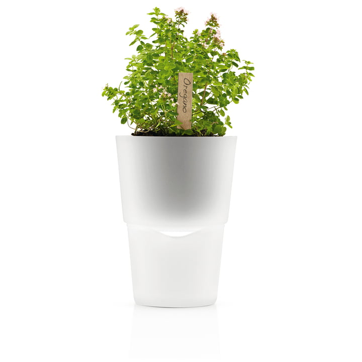 Blumentopf - klein, Frostglas