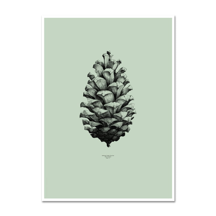 Paper Collective - Nature 1:1 Pine Cone (green)
