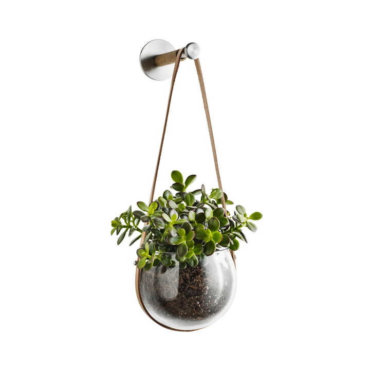 Design with light Hängeschale 14 cm mit Wandhaken von Holmegaard mit Pflanze