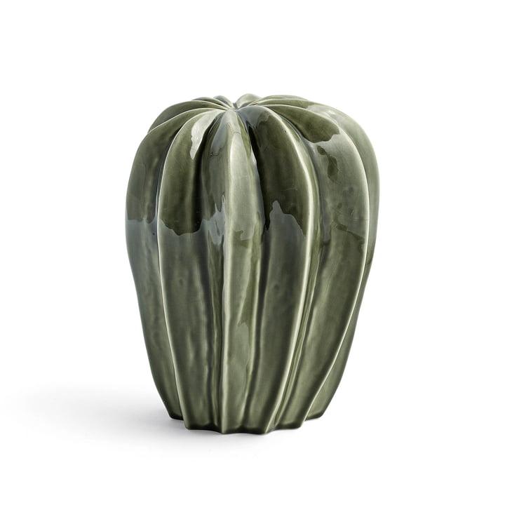 Hay - Cacti uno
