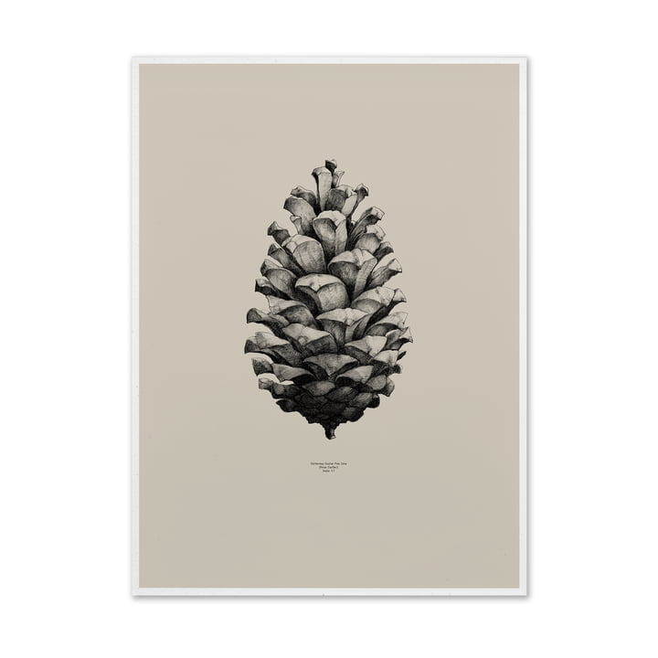 Pine Cone Poster von Paper Collective
