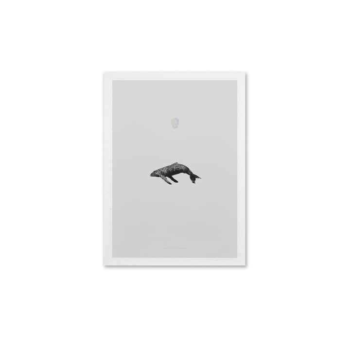 Paper Collective - Whale Reprise, 40 x 30 cm