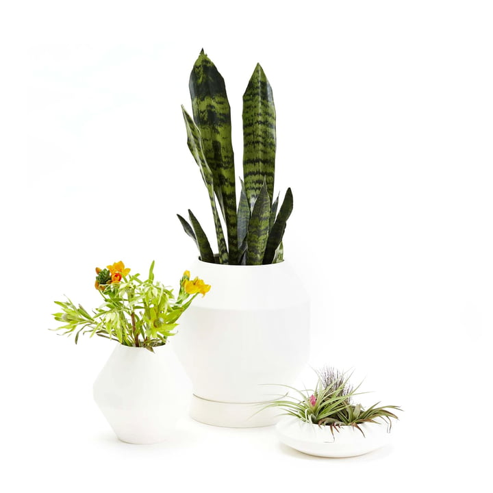 Areaware - Radial Vessels Vase, Blumentopf, Pflanzschale