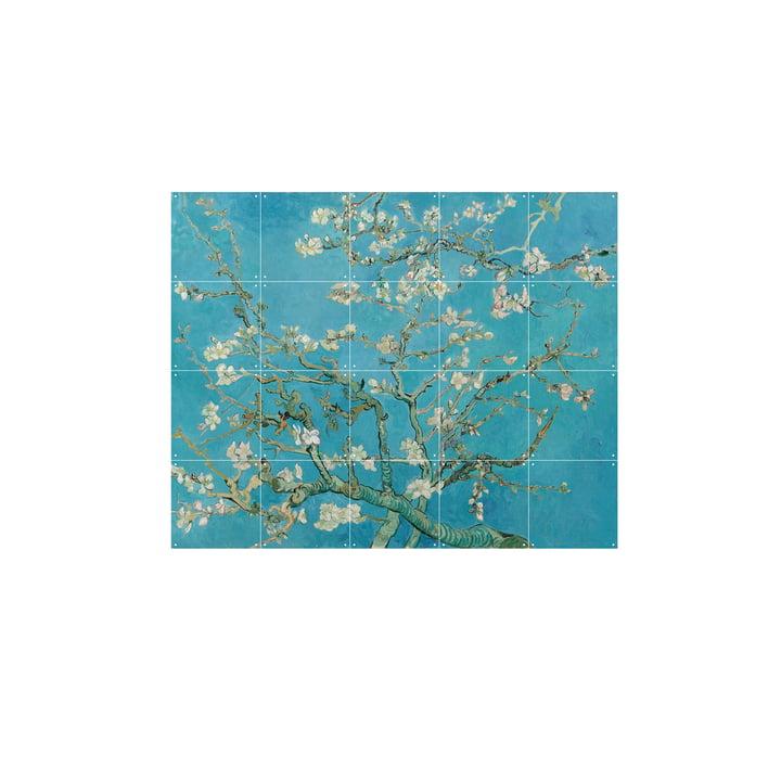 Mandelblüte (Vincent van Gogh) 100 x 80 cm von IXXI