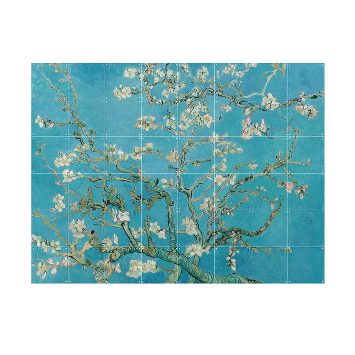 Mandelblüte (Vincent van Gogh) von IXXI in 160 x 120 cm