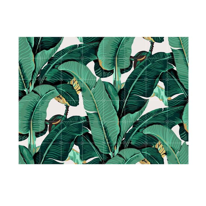 Banana Leaf von IXXI 160 x 120 cm