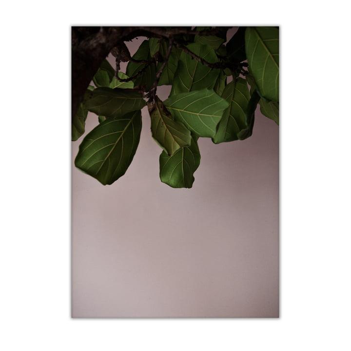 Green Leaves 50 x 70 cm von Paper Collective
