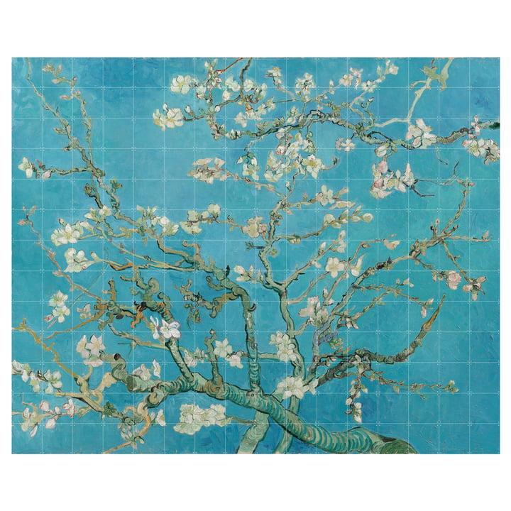 Mandelblüte (Van Gogh) 320 x 260 cm von IXXI