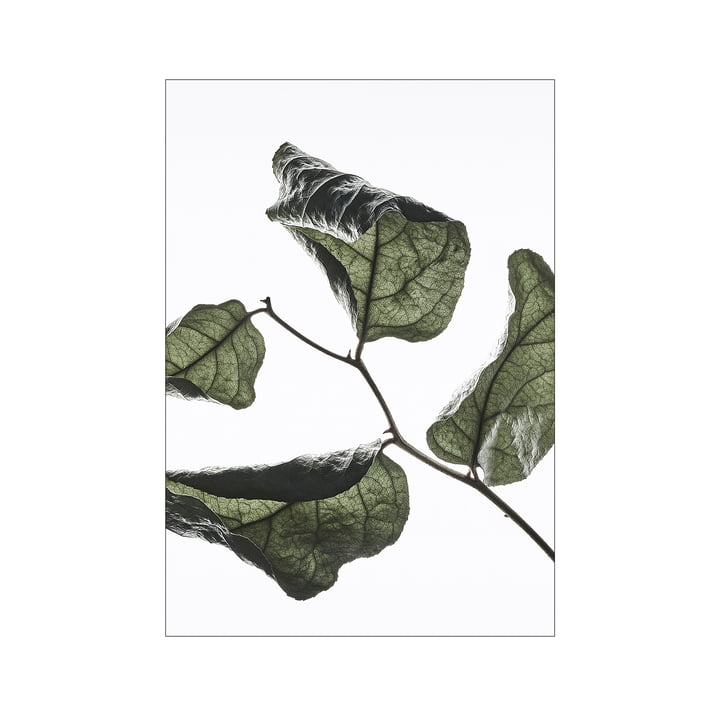 Floating Leaves No. 3, A3 von Moebe