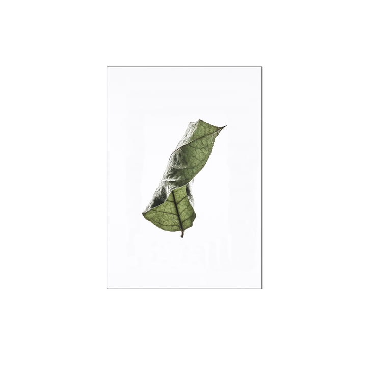 Floating Leaves No. 4, A4 von Moebe