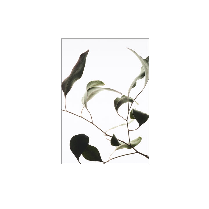 Floating Leaves No. 9, A4 von Moebe
