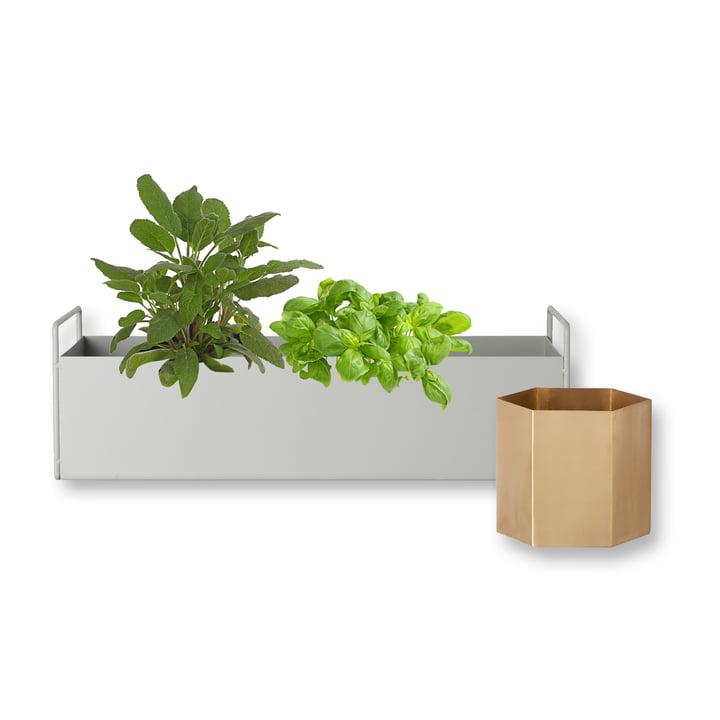 Plant Box small in hellgrau mit Hexagon Topf large aus Messing von ferm Living