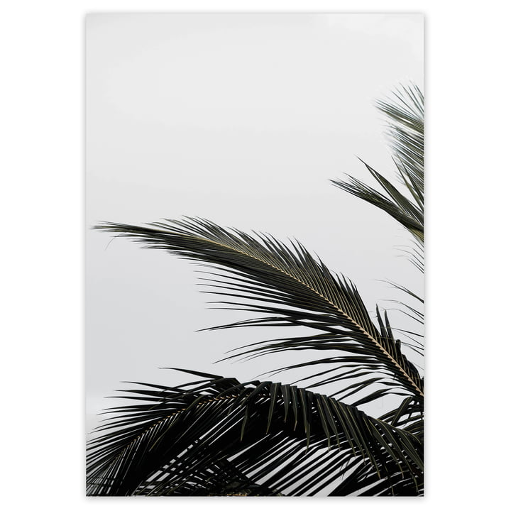 artvoll - Palm Leaf Poster