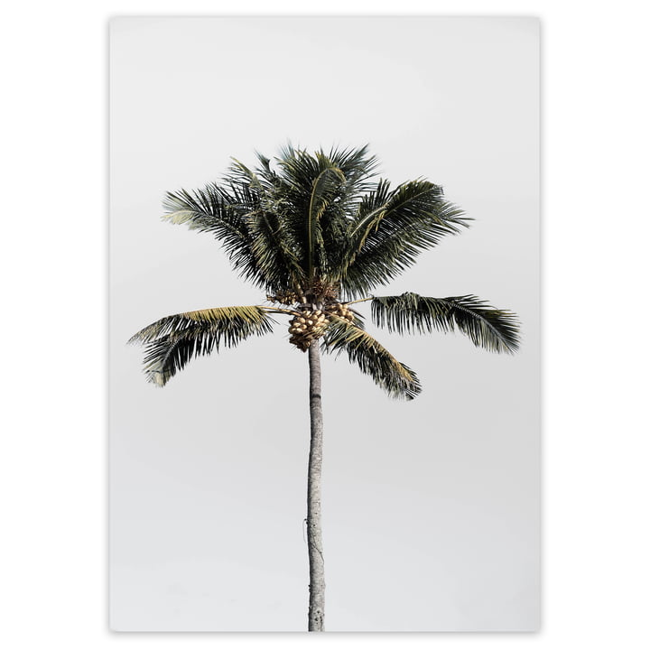 artvoll - Palm Tree No.1 Poster, 50 x 70 cm