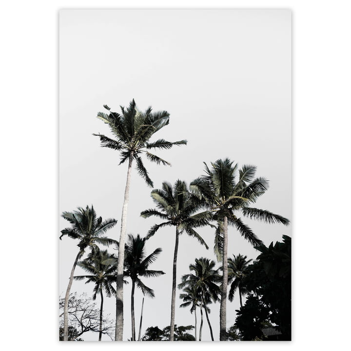 artvoll - Palm Tree No. 3 Poster
