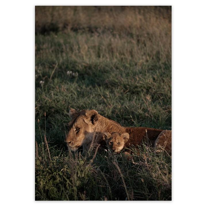 artvoll - Lion Poster