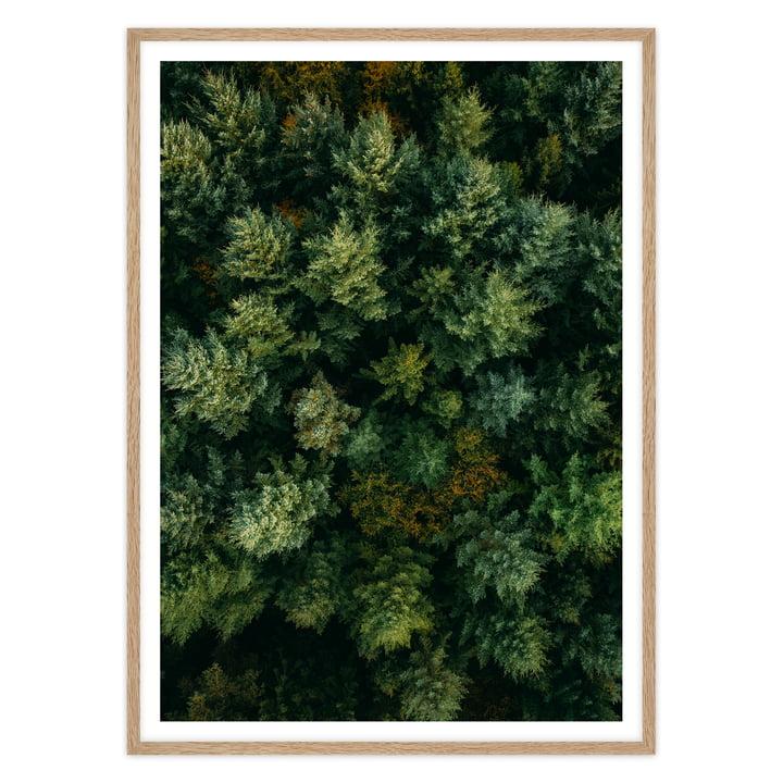 artvoll - Forest Poster mit Rahmen, Eiche natur
