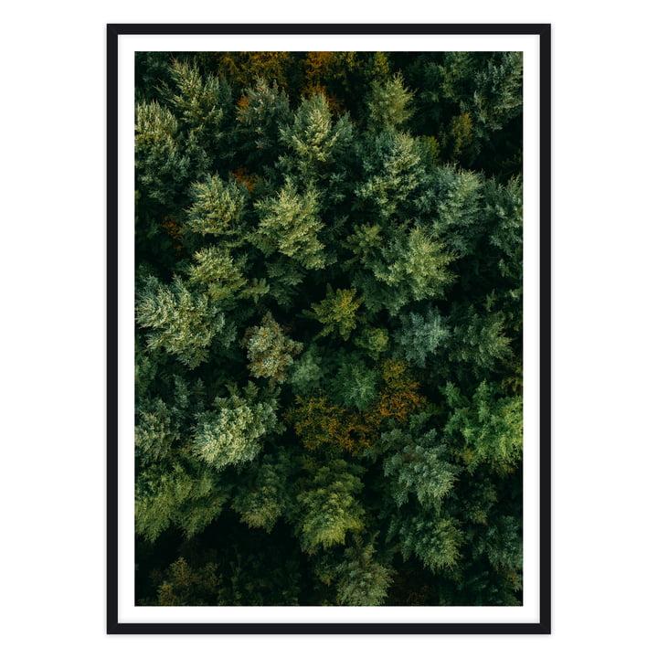 artvoll - Forest Poster mit Rahmen, schwarz