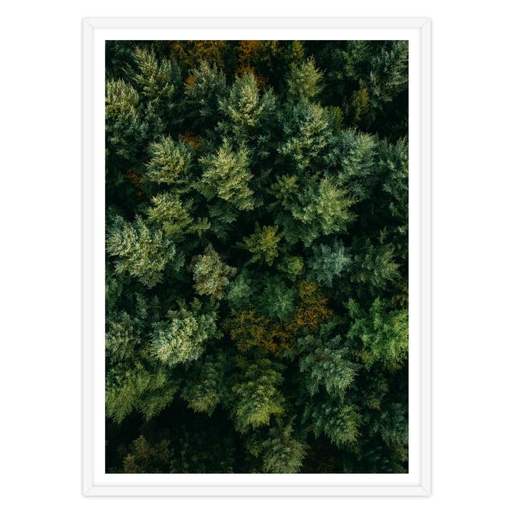 artvoll - Forest Poster mit Rahmen, weiß