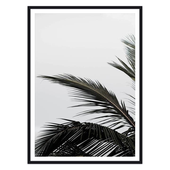 artvoll - Palm Leaf Poster mit Rahmen, schwarz