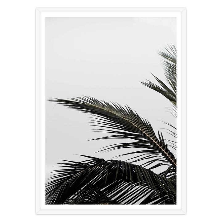 artvoll - Palm Leaf Poster mit Rahmen, weiß