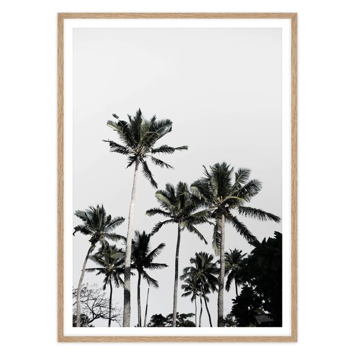 artvoll - Palm Tree III Poster mit Rahmen, Eiche natur