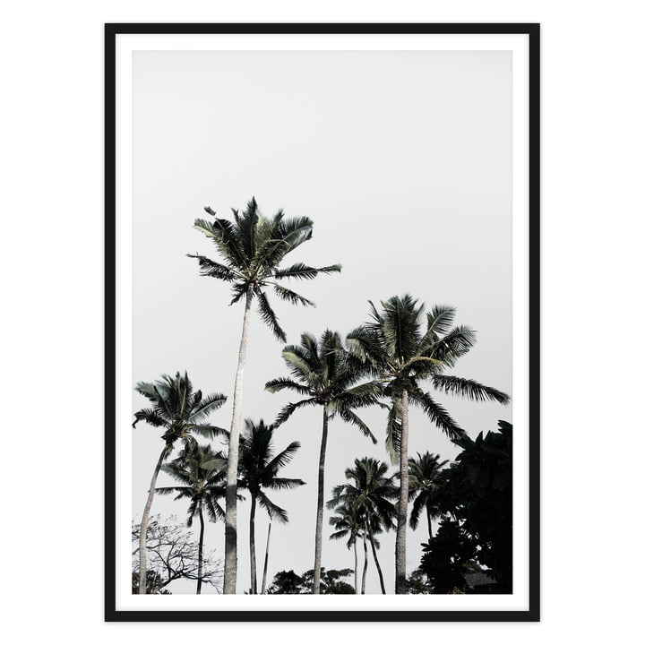 artvoll - Palm Tree III Poster mit Rahmen, schwarz