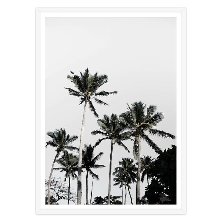 artvoll - Palm Tree III Poster mit Rahmen, weiß