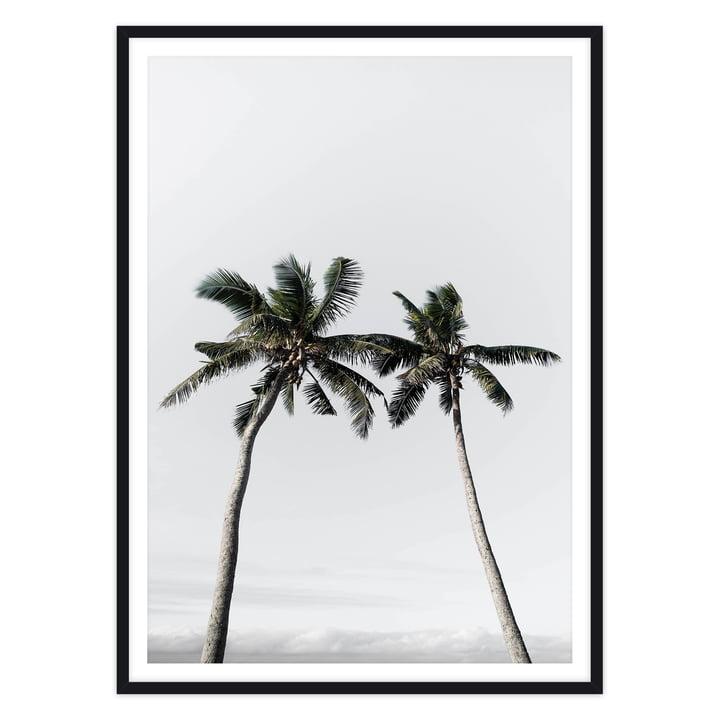 artvoll - Palm Tree II Poster mit Rahmen, schwarz