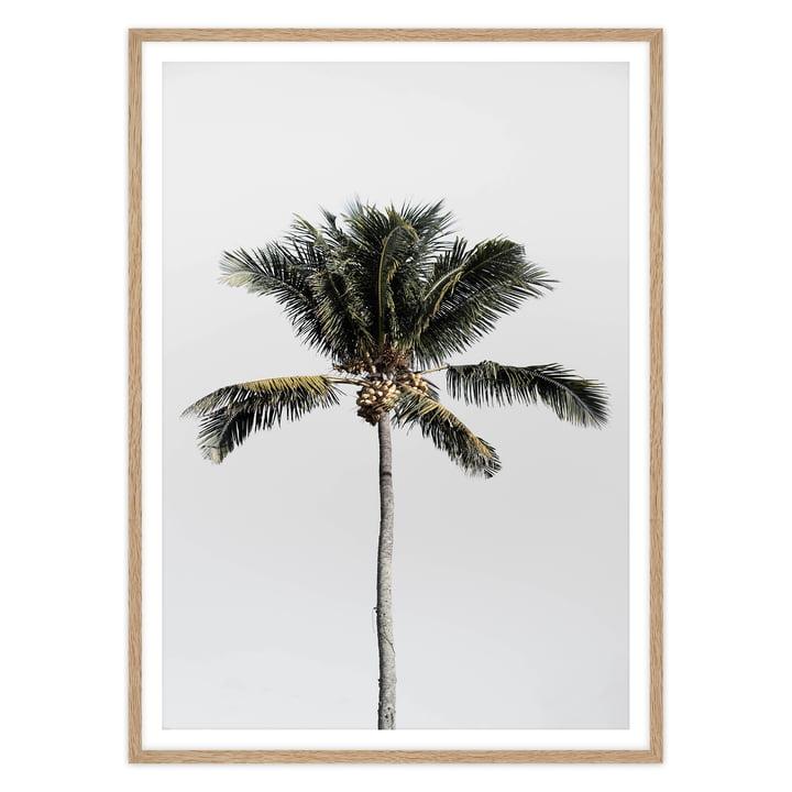 artvoll - Palm Tree No. 1 Poster mit Rahmen, Eiche natur