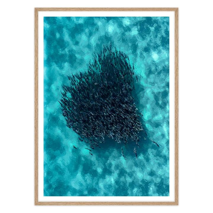 artvoll - Swarm Poster mit Rahmen, Eiche natur