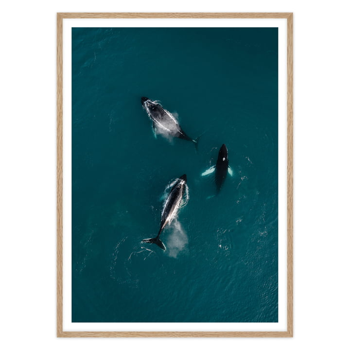 artvoll - Whales Poster mit Rahmen, Eiche natur