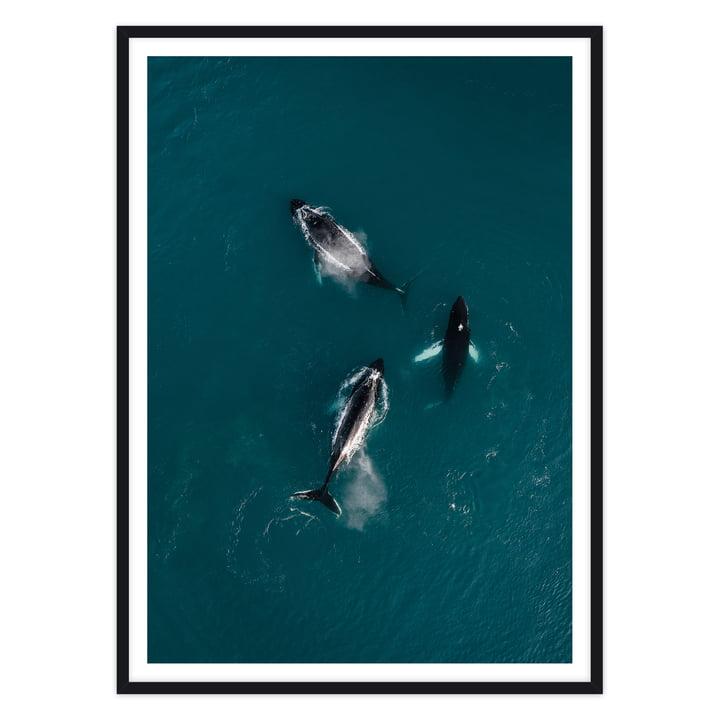 Artvoll - Whales Poster mit Rahmen, schwarz
